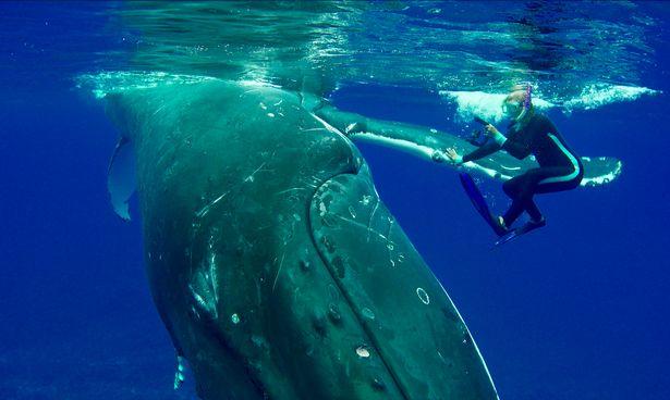 Cô gái bị cá voi lưng gù khổng lồ 'kéo đi' suốt 10 phút để tránh bị cá mập trắng tấn công