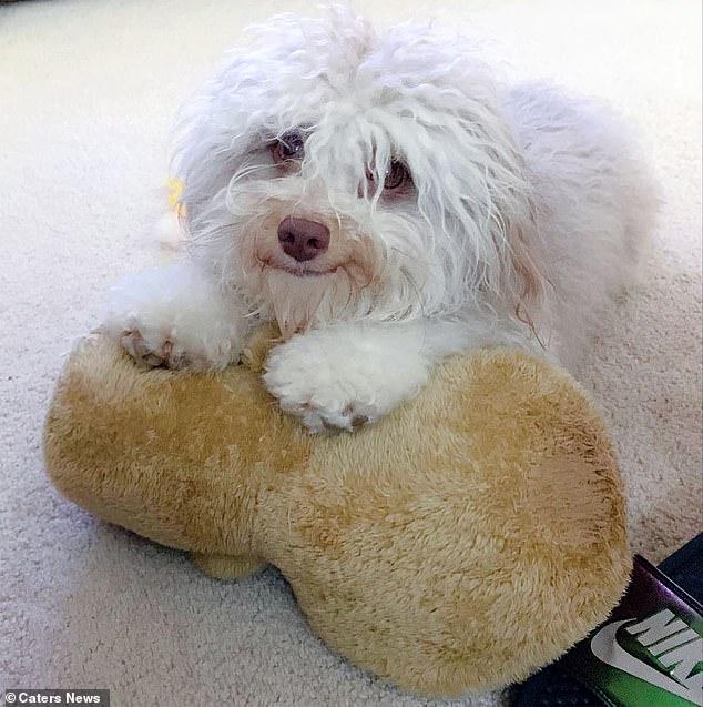 Chú chó nổi tiếng nhờ có nụ cười giống hệt 1 anh chàng đẹp trai