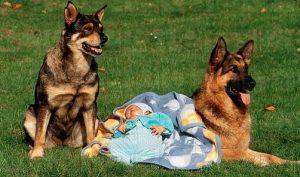 Cảm động: Bé sơ sinh bị vứt trong bụi cây được 4 chú chó nhỏ bảo vệ canh chừng