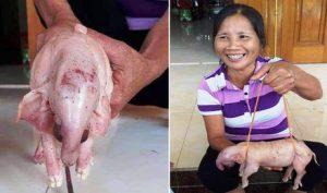 Nghệ An: Lợn nái đẻ ra 'voi' con