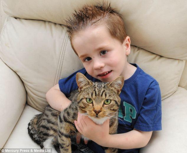 Phát hiện cậu chủ bị bắt nạt, chú mèo nhào tới tấn công người lạ