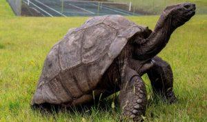 Gặp gỡ sinh vật sống thọ nhất thế giới, 187 tuổi vẫn khỏe mạnh yêu đời