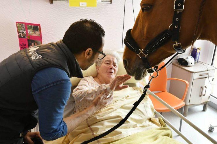 Peyo chỉ cần đứng gần thì ngay lập tức bệnh nhân sẽ cảm thấy thích chú ngựa này ngay