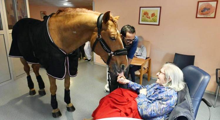 Peyo chú ngựa có khả năng khiến người bệnh cảm thấy khoẻ  và hạnh phúc hơn
