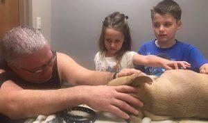 Chú chó nhỏ qua đời sau khi liều mình bảo vệ 2 cậu bé trước rắn độc