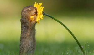 Khoảnh khắc ấn tượng: Sóc con vịn một bông hoa và ngửi hương