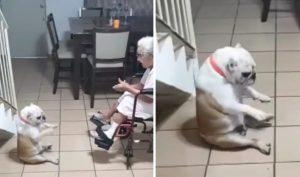 'Bà ngoại' cất giọng hát, chú chó lập tức nhún nhảy theo