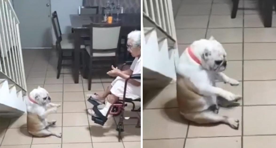 Clip: Chú chó nhún nhảy theo điệu nhạc khi người bà cất giọng hát