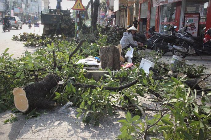 Gần 50 cây xanh, chủ yếu là cây hoa sữa bị đốn hạ.