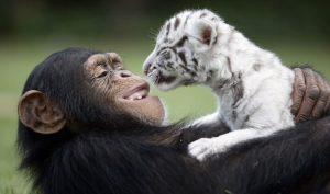 Tình bạn kỳ lạ giữa những con vật không cùng giống loài