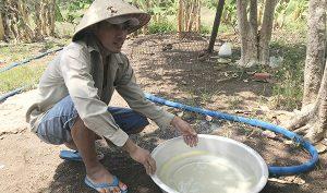 Bà Rịa-Vũng Tàu: Trại heo quy mô lớn nằm đầu nguồn nước sinh hoạt