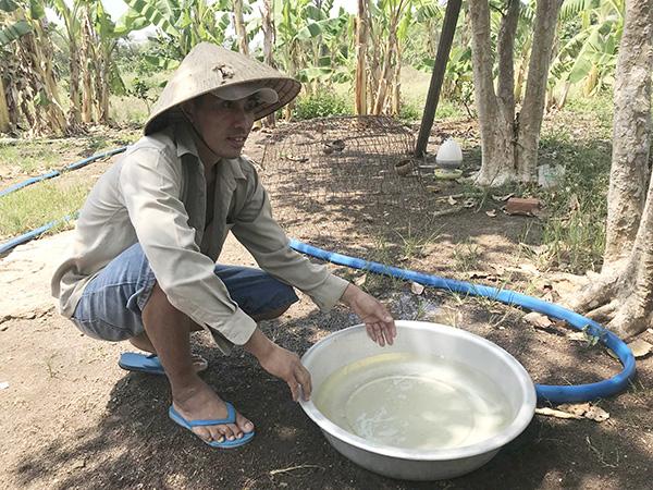 Bà Rịa-Vũng Tàu: Trại heo quy mô lớn nằm đầu nguồn nước sinh hoạt-ảnh 2
