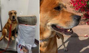Chú chó trầm cảm sau khi bị chủ nhân bỏ rơi tại trạm cứu hộ