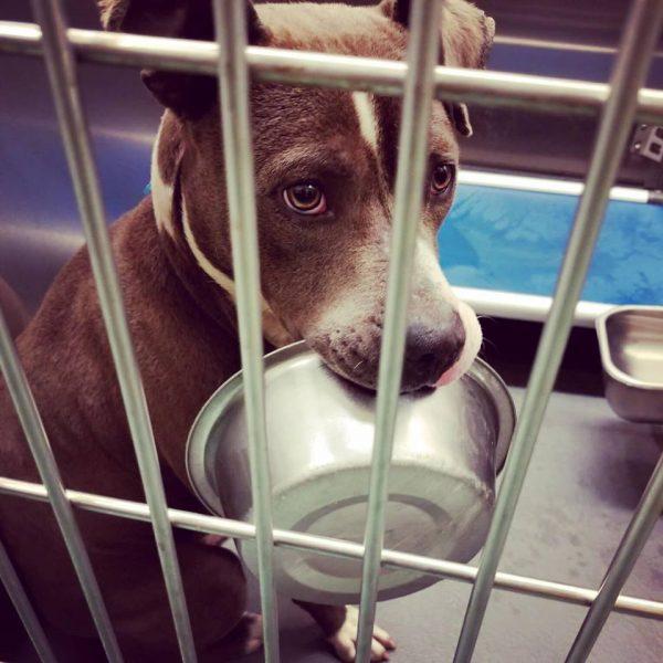 Chú chó từ chối được nhận nuôi nếu không được mang theo … cái bát