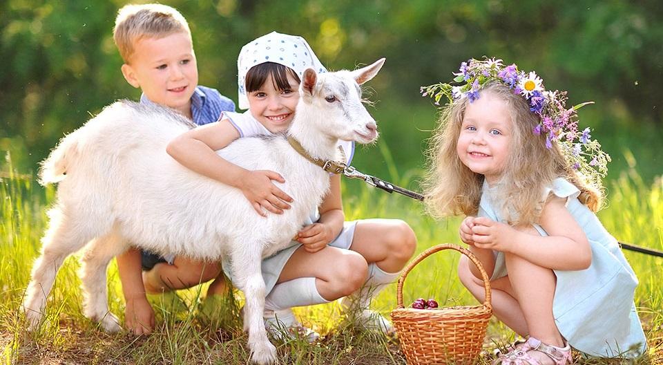 Loài dê thường bị thu hút bởi những người lạc quan và vui vẻ