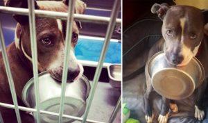 Chú chó từ chối được nhận nuôi nếu không được mang theo… cái bát