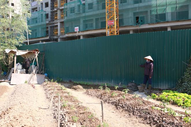 Hà Nội: Hàng ngàn gốc đào chết khô trước Tết Nguyên Đán 2020-ảnh 6