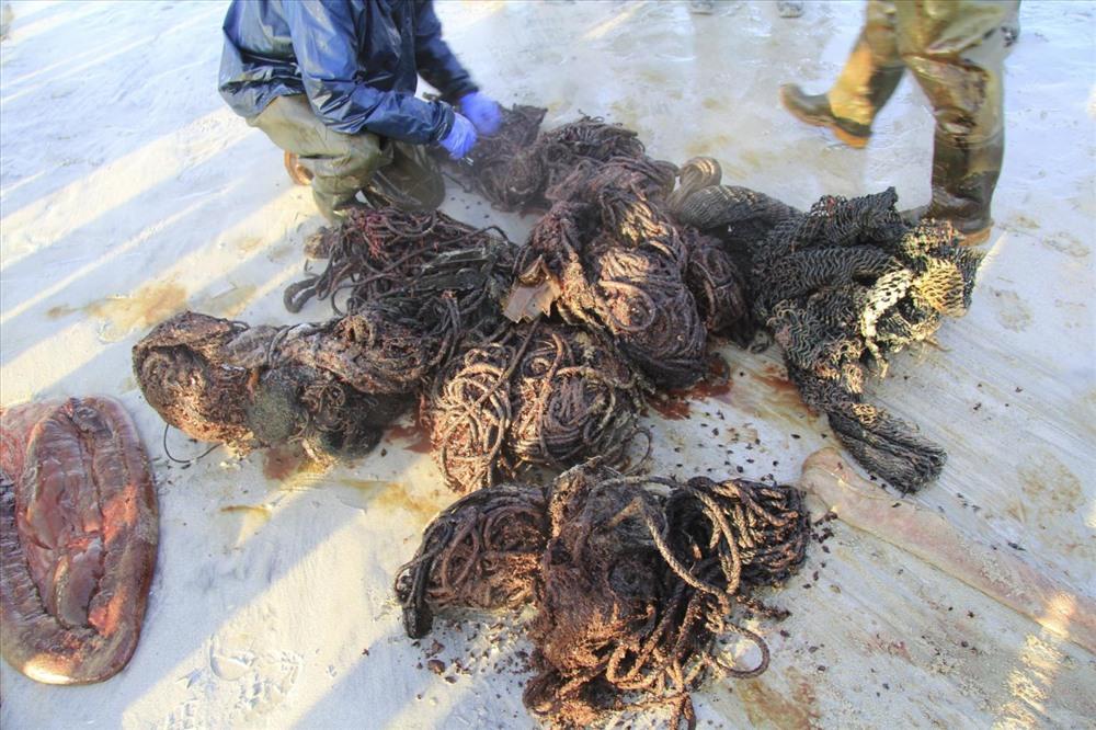 Dây thừng và lưới được tìm thấy trong thi thể cá voi.