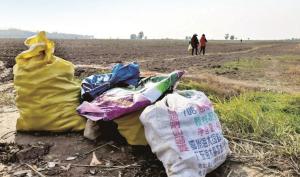 Trung Quốc: Hàng xóm xin vài củ cải, nông dân mất luôn vụ mùa gần tỷ đồng