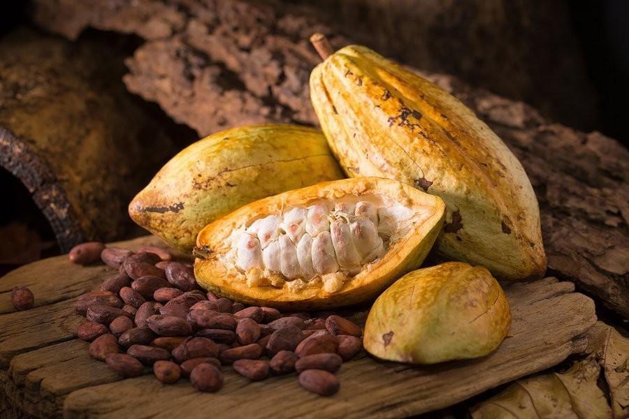Cacao được làm từ hạt cây cacao đã qua sấy khô và lên men.