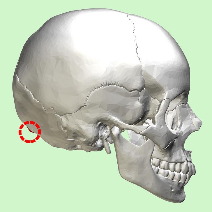 Những gai xương này thường mọc ở phía sau hộp sọ và chúng trông giống như những chiếc sừng.