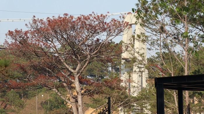 Đà Lạt Sử dụng 27 lao động Trung Quốc để xây dựng cầu kính trái phép-ảnh 2