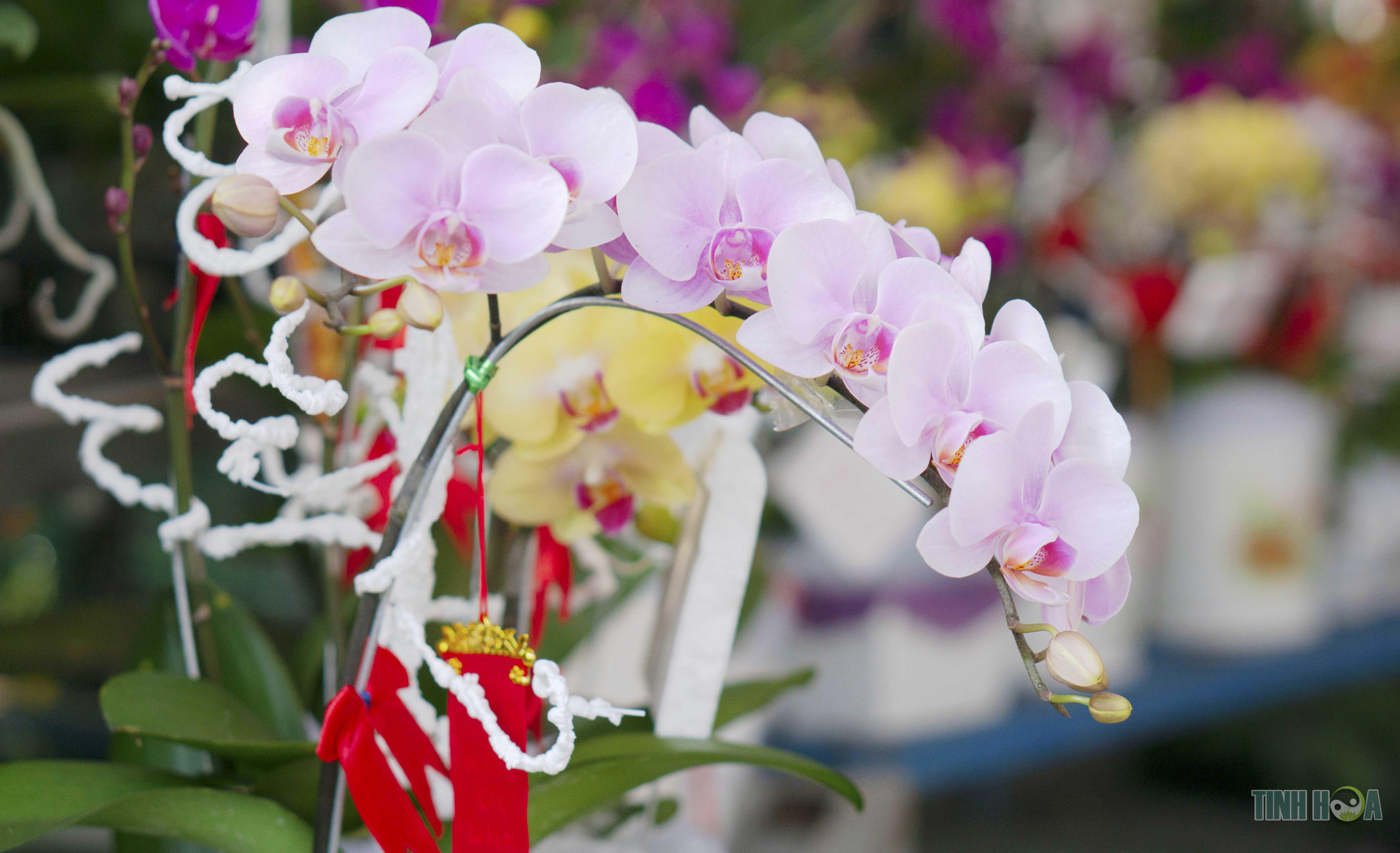 Dạo phố phường ngắm chợ hoa, ô hay Tết đã về trước ngõ!