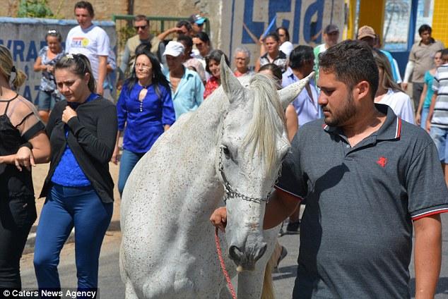 Chú ngựa khóc thương trong đám tang của người chủ vừa qua đời