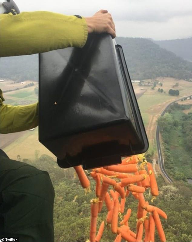 Úc: Thả hàng tấn cà rốt và khoai lang để cứu đói động vật bị cháy rừng - ảnh 1