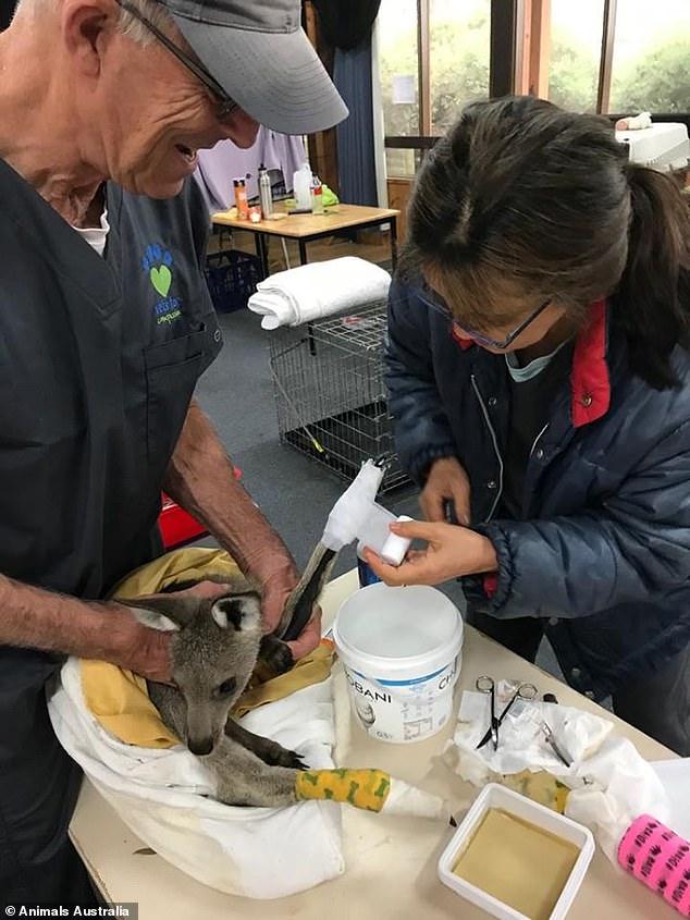 Úc: Thả hàng tấn cà rốt và khoai lang để cứu đói động vật bị cháy rừng - ảnh 9