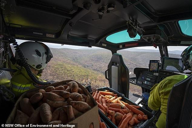 Úc: Thả hàng tấn cà rốt và khoai lang để cứu đói động vật bị cháy rừng - ảnh 3