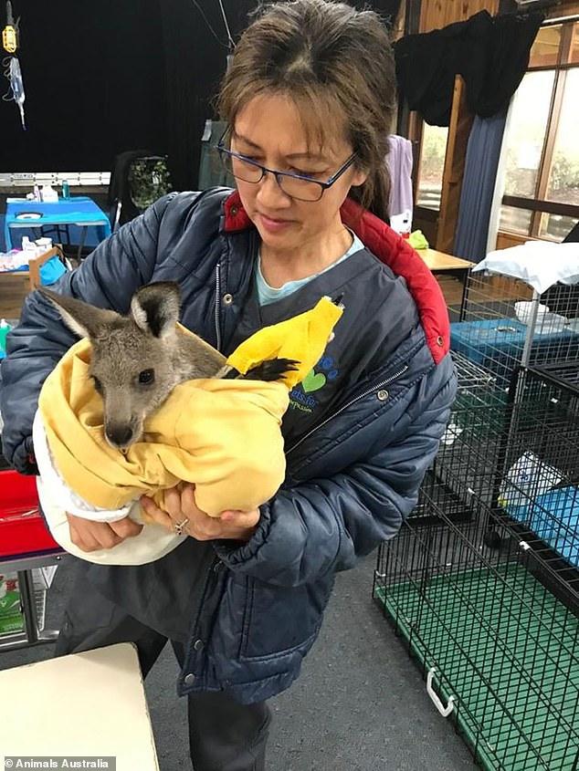 Úc: Thả hàng tấn cà rốt và khoai lang để cứu đói động vật bị cháy rừng - ảnh 8