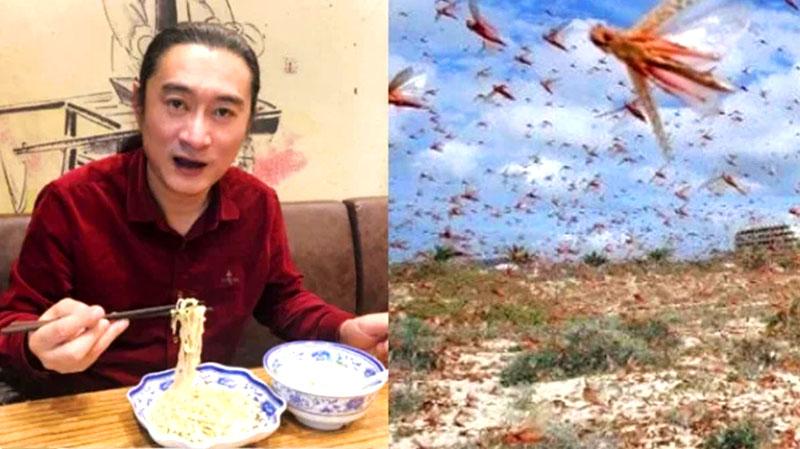 """Dịch châu chấu đang áp sát TQ, nghệ sĩ Đài Loan kêu gọi người dân """"ăn côn trùng cứu quốc"""""""