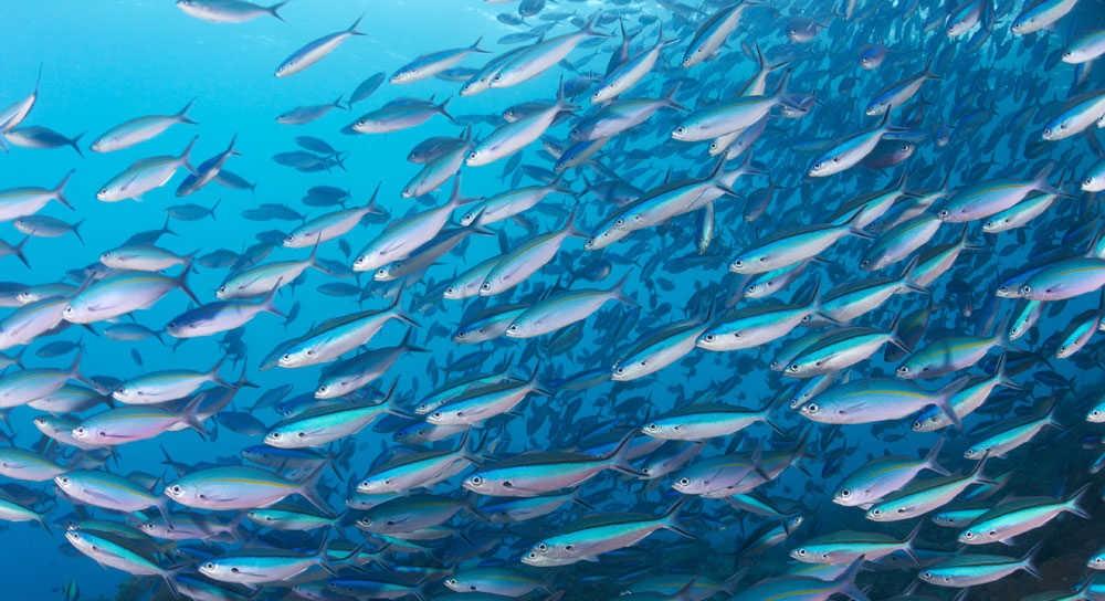 Hàm lượng oxy trong đại dương giảm mạnh, đe dọa mạng sống của sinh vật biển