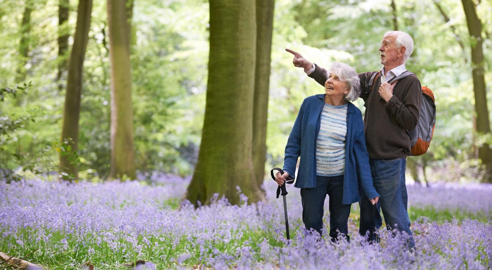 Đi bộ trong thiên nhiên là bài tập vô cùng tốt giúp tăng cường trí não