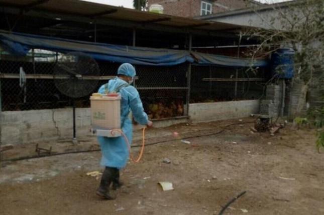 Cơ quan chức năng khử trùng chuồng trại chăn nuôi gia cầm, phòng dịch cúm A/H5N6. (Ảnh qua laodong)