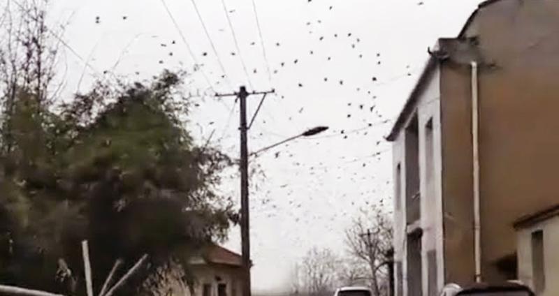 Các đàn quạ đen xuất hiện nhiều nơi trên bầu trời Trung Quốc.