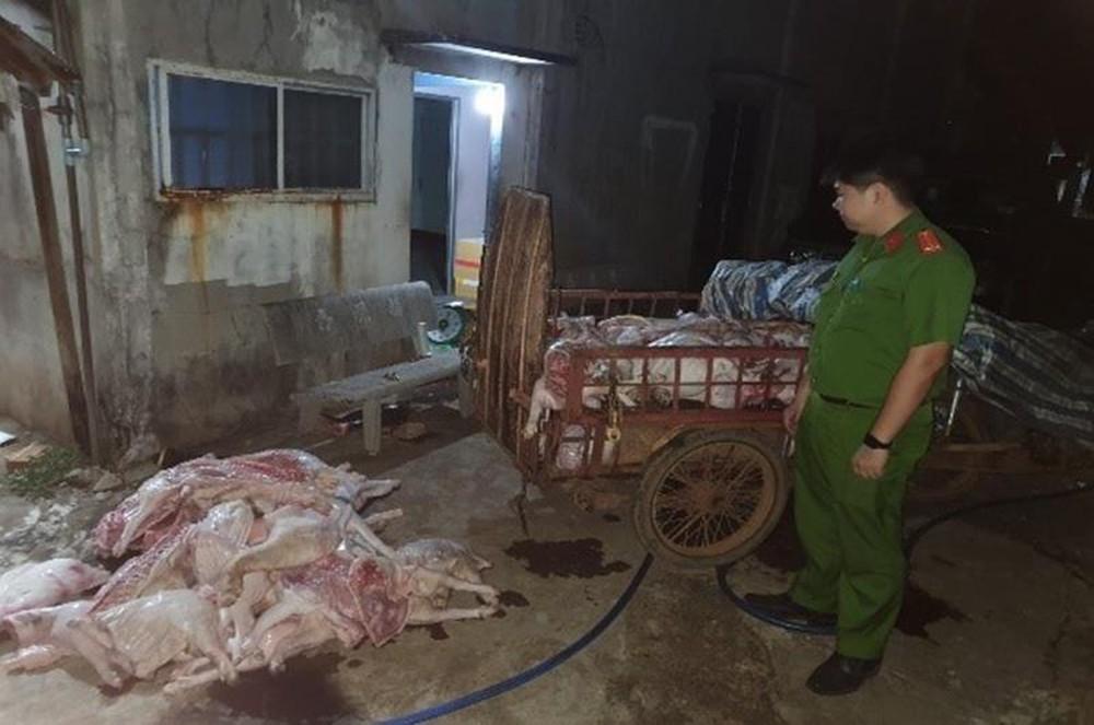 Số heo bệnh được thu gom đem về xẻ thịt để bán cho công nhân.