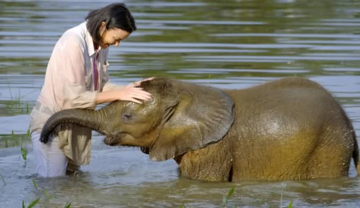 Từng có một thời gian việc suýt chết đuối khi băng qua sông khiến chú voi Moyo tội nghiệp bị tổn thương tâm lý nặng nề và rất sợ bơi lội.