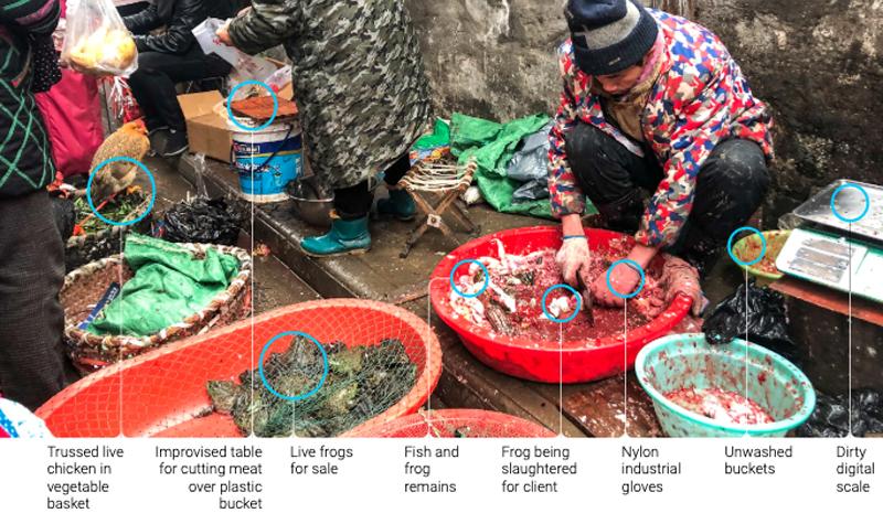 Chính quyền Vũ Hán (Trung Quốc) cho rằng virus corona lây truyền từ động vật sang người lần đầu tại chợ Hoa Nam