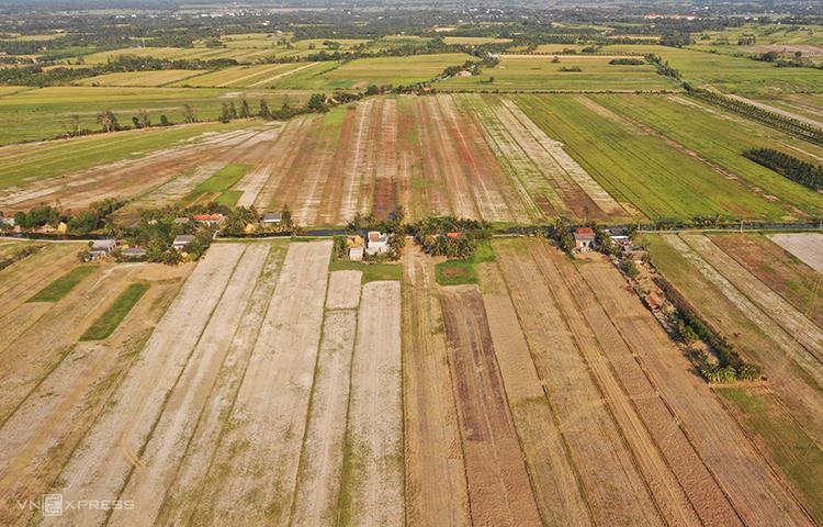 Cánh đồng khô hạn ở huyện Ba Tri, tỉnh Bến Tre, đầu tháng 3. (Ảnh qua vnexpress)