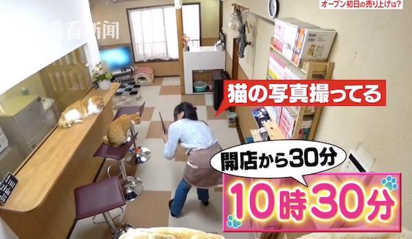 Quán cà phê mèo của Saki.