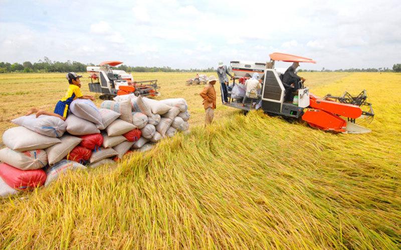 Dịch virus Vũ Hán Trung Quốc bất ngờ tăng mua gạo của Việt Nam