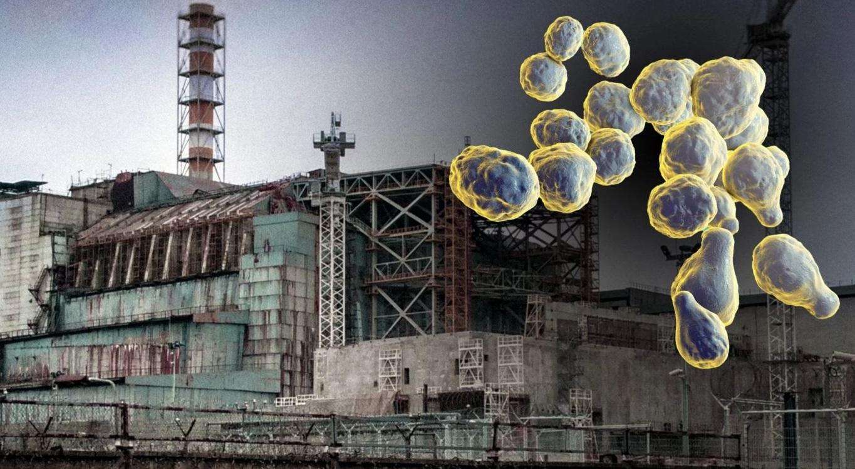 Phát hiện ra loài nấm sinh trưởng bằng cách 'ăn bức xạ' gần lò phản ứng hạt nhân Chernobyl