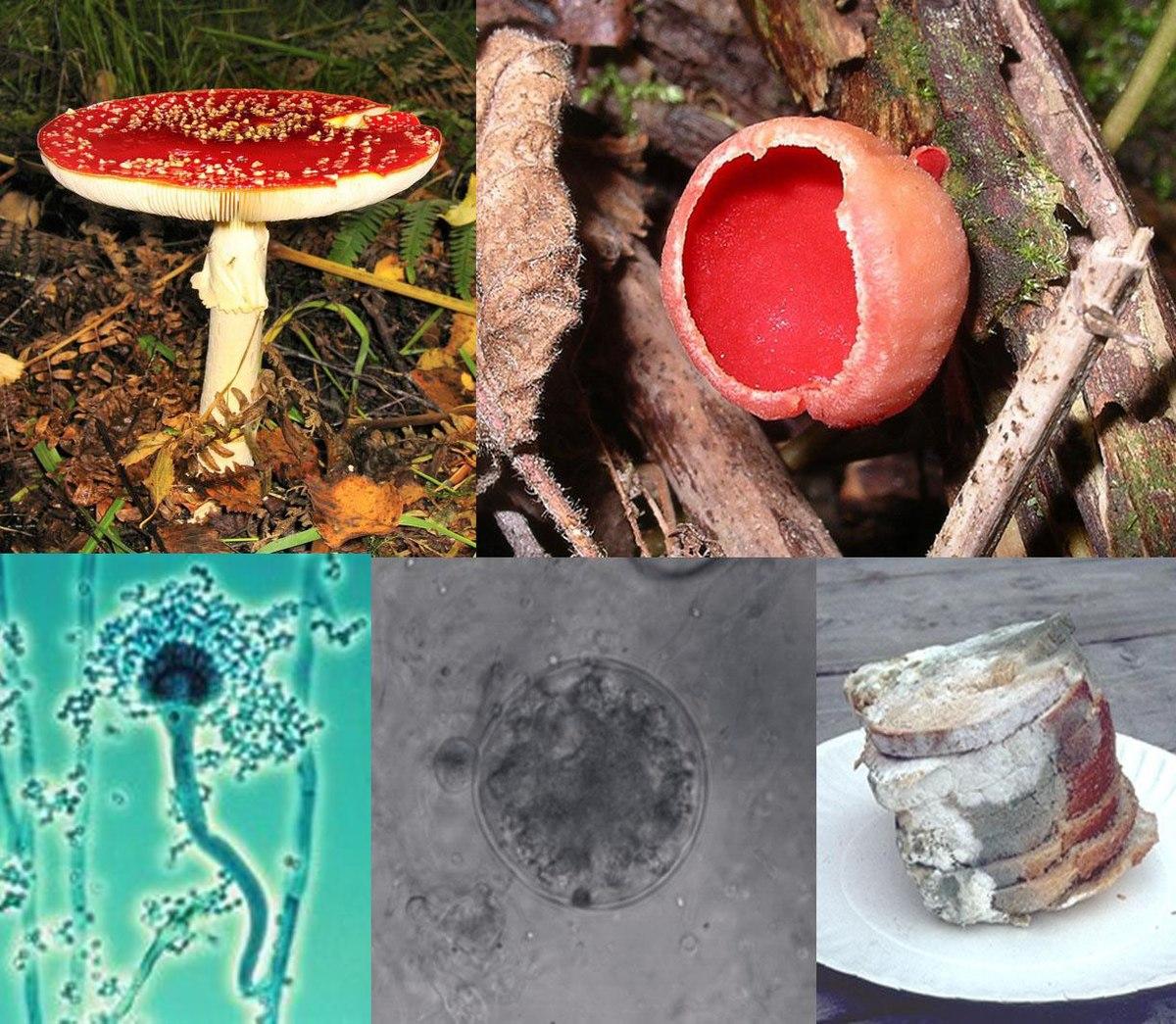 Các loại nấm khác nhau
