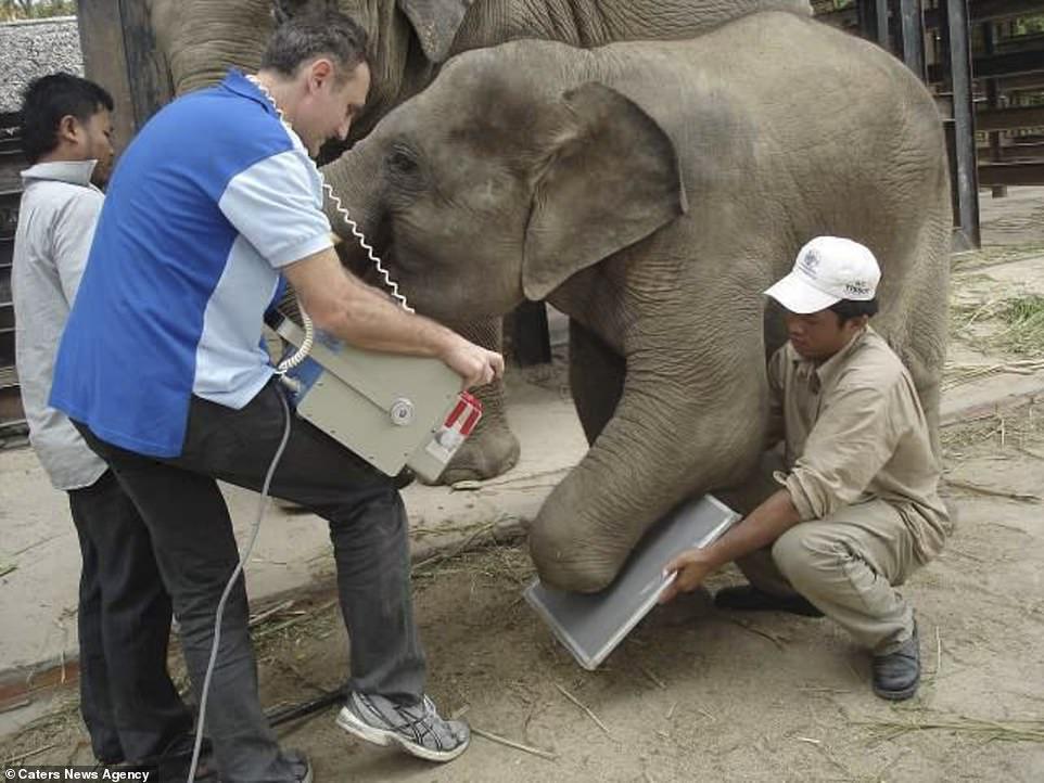 Chhouk còn được Trường Chân tay giả và Chỉnh hình Campuchia (CSPO) tài trợ cho một chiếc chân để có thể đi lại thoải mái.