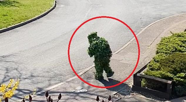 """""""Bụi cây"""" còn đi bộ ra cả đường nhựa."""