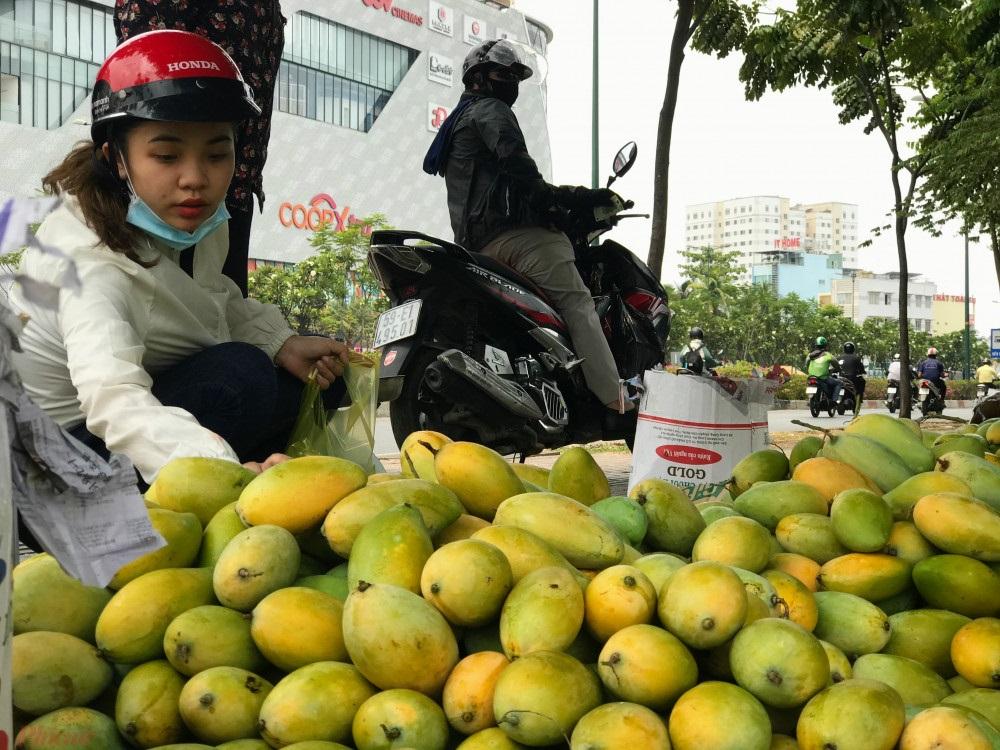 """Do dịch virus Vũ Hán """"xoài"""" chỉ còn 3.500 mỗi kg, nông dân vẫn ế ẩm 4"""