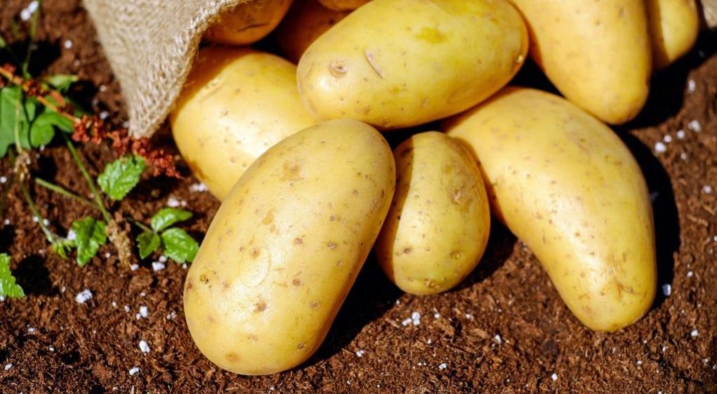 Lợi ích sức khỏe đáng ngạc nhiên của khoai tây