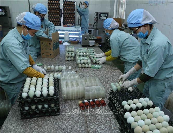 Dịch virus Vũ Hán: Doanh nghiệp kinh doanh 'thịt, trứng' bất ngờ có doanh thu đột biến - Ảnh 2